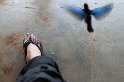Bird and I