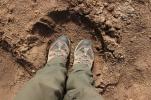 My feet and an elephant footstep